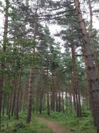 El bosque sueco a paseo